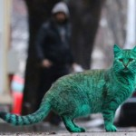 varna-green-cat-3